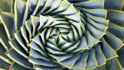 Succulent Spiral Widescreen HD Wallpaper 62288