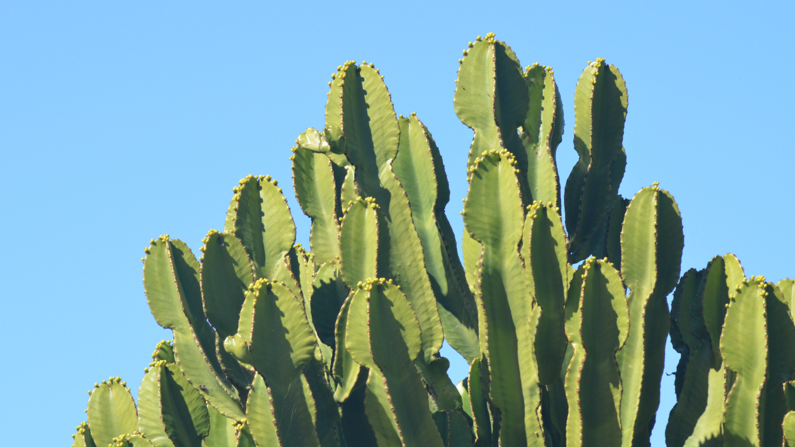 cactus wallpaper background 59186