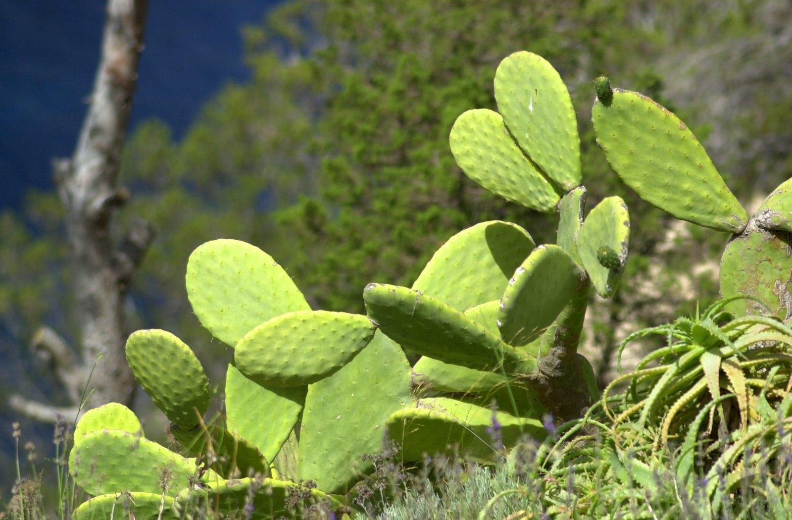 cactus wallpaper photos 59185