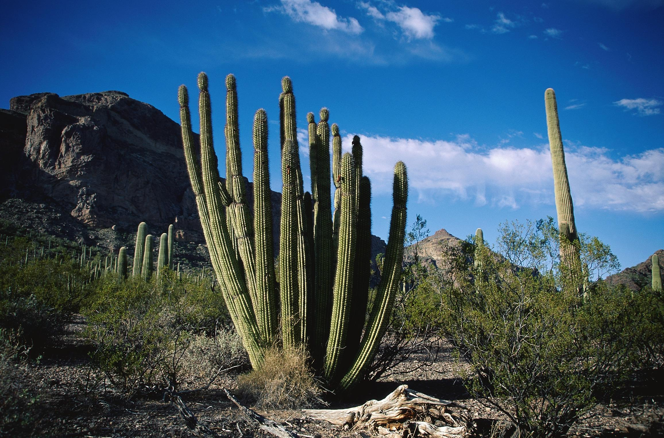 cactus wide wallpaper 59187