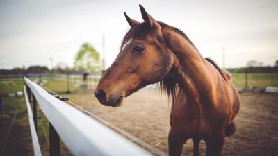 Brown Horse Widescreen HD Wallpaper 62469