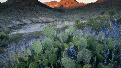 Cactus Nature Wallpaper 59189