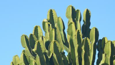Cactus Wallpaper Background 59186