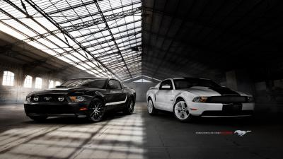Ford Mustangs Wallpaper 62046