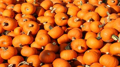 Mini Pumpkins Wallpaper Background 61984