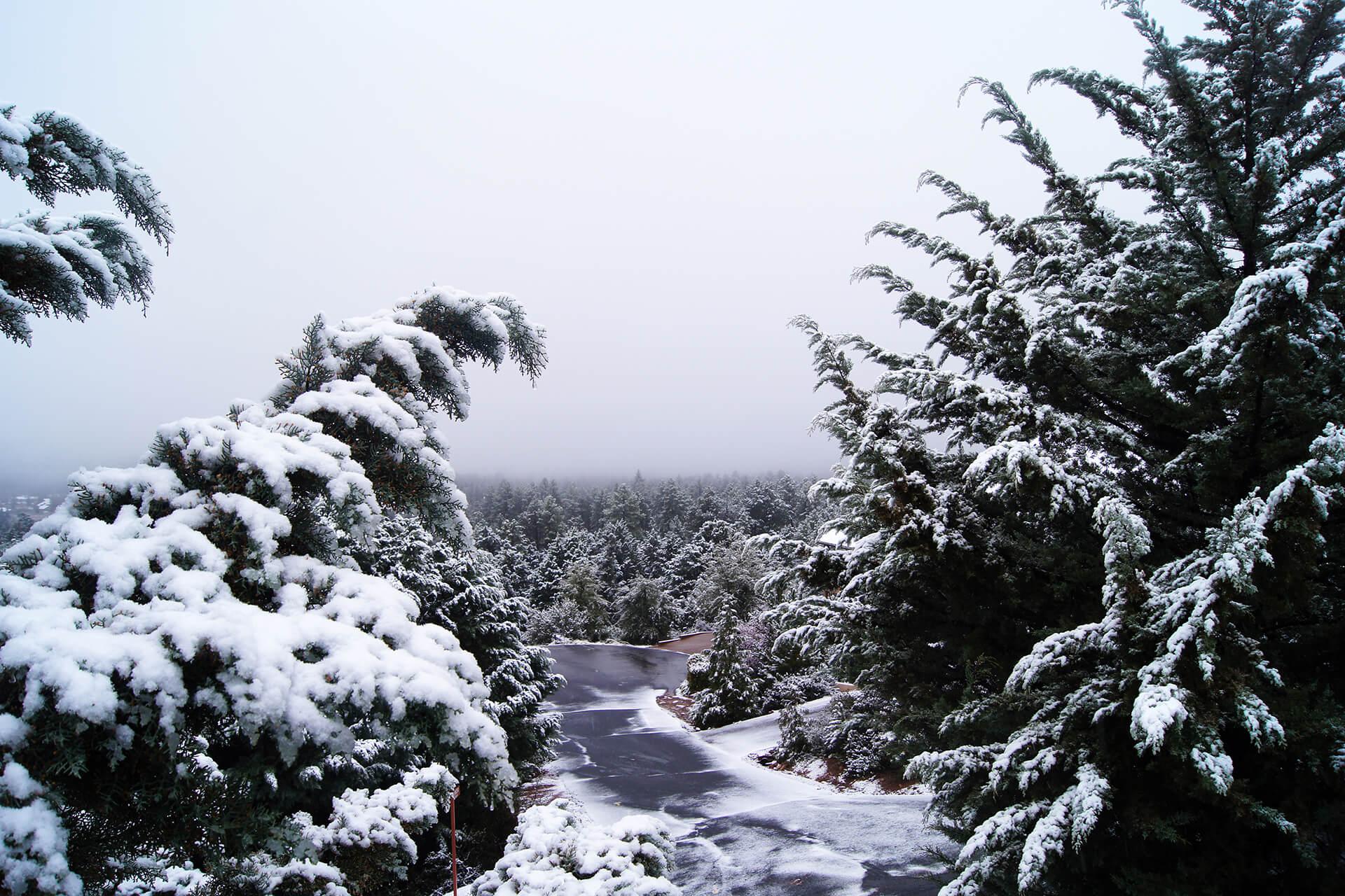 pine arizona snow wallpaper 61817