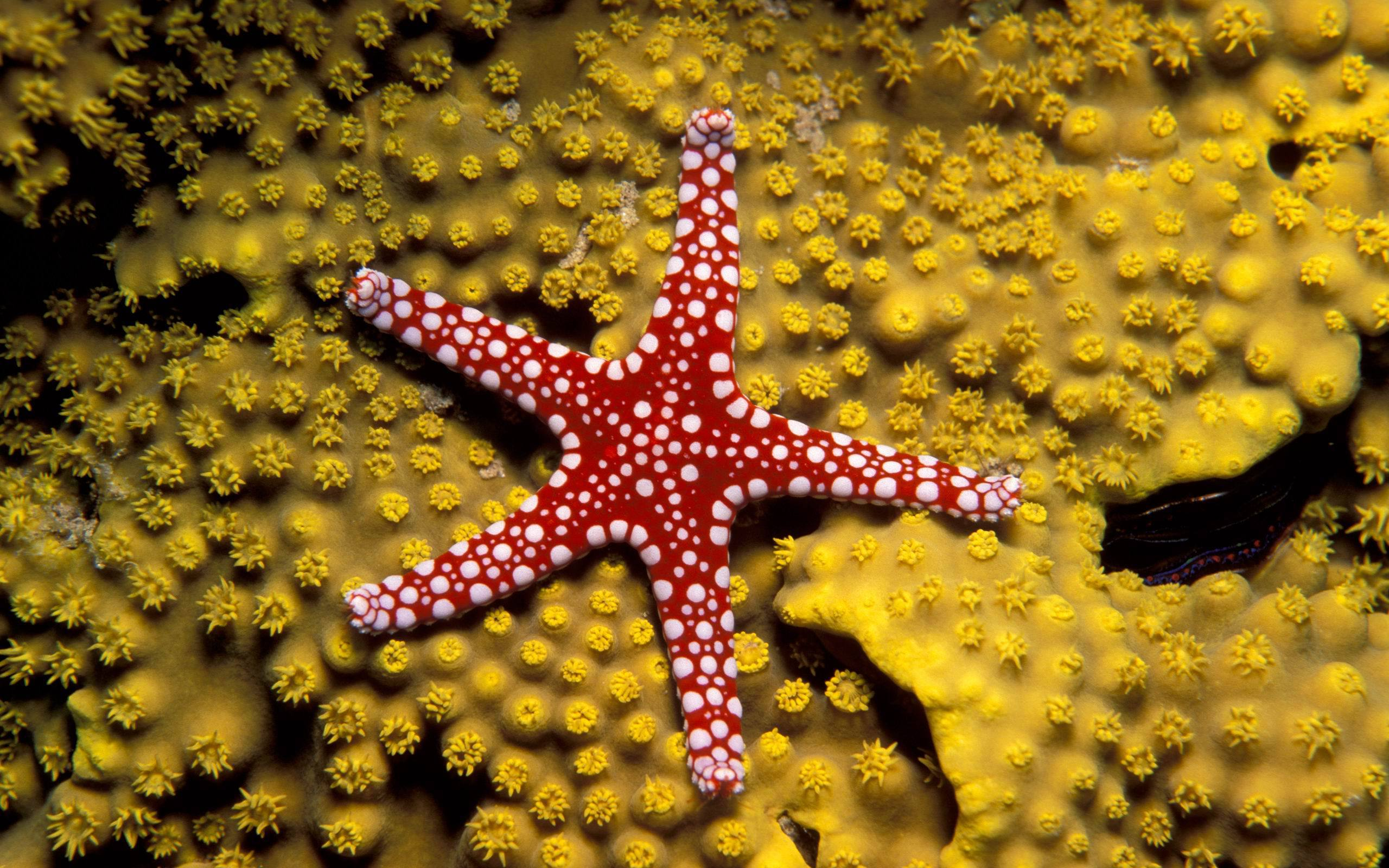 starfish wide wallpaper background 61205