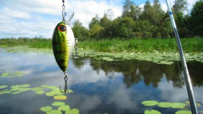 Fishing Bait Wallpaper Background 60364