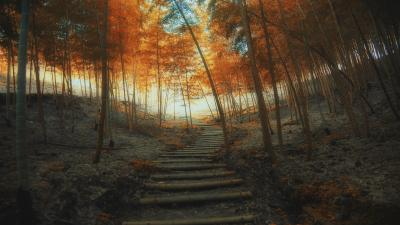 Nature Stairs Fall Desktop Wallpaper 61959