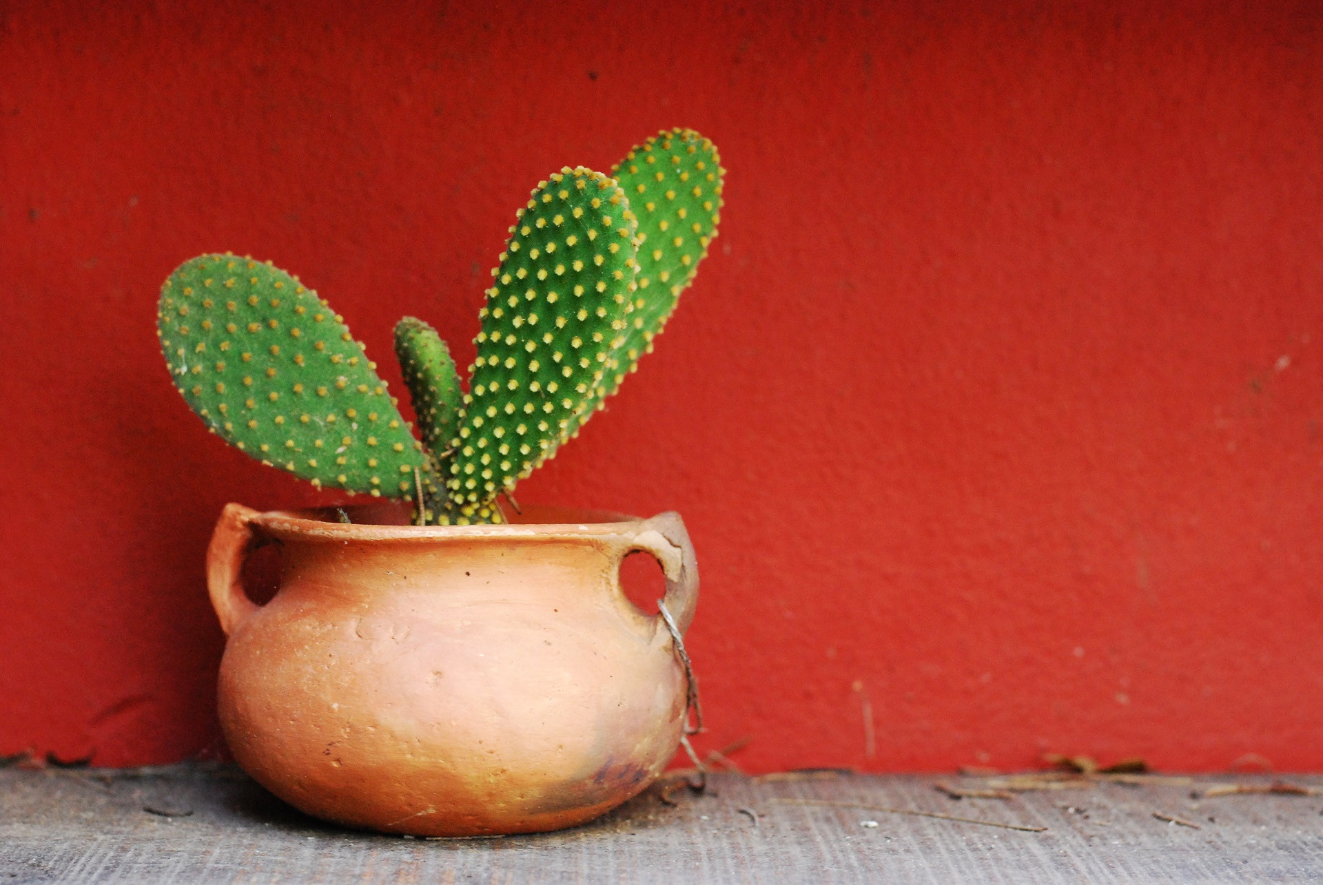 cute cactus desktop wallpaper 62086