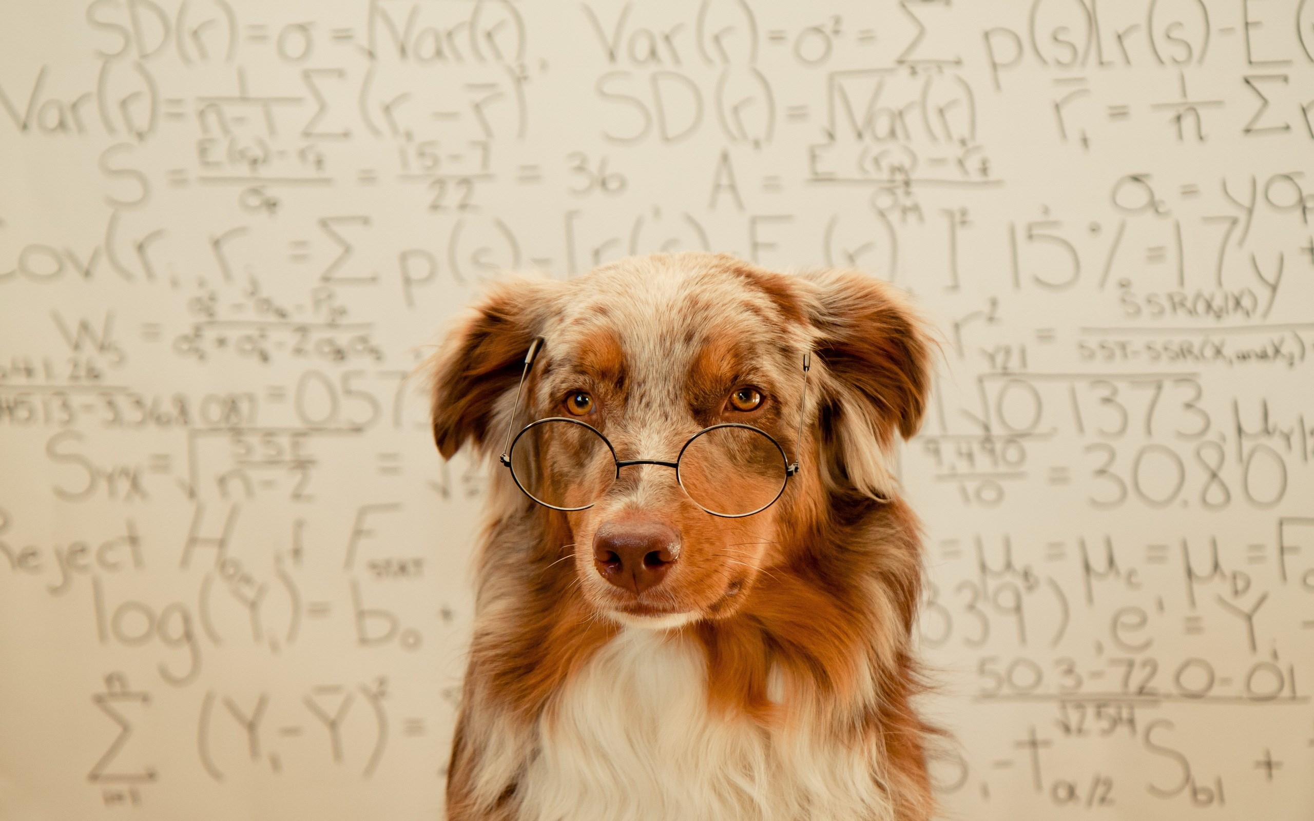 dog wearing glasses wallpaper background 60405