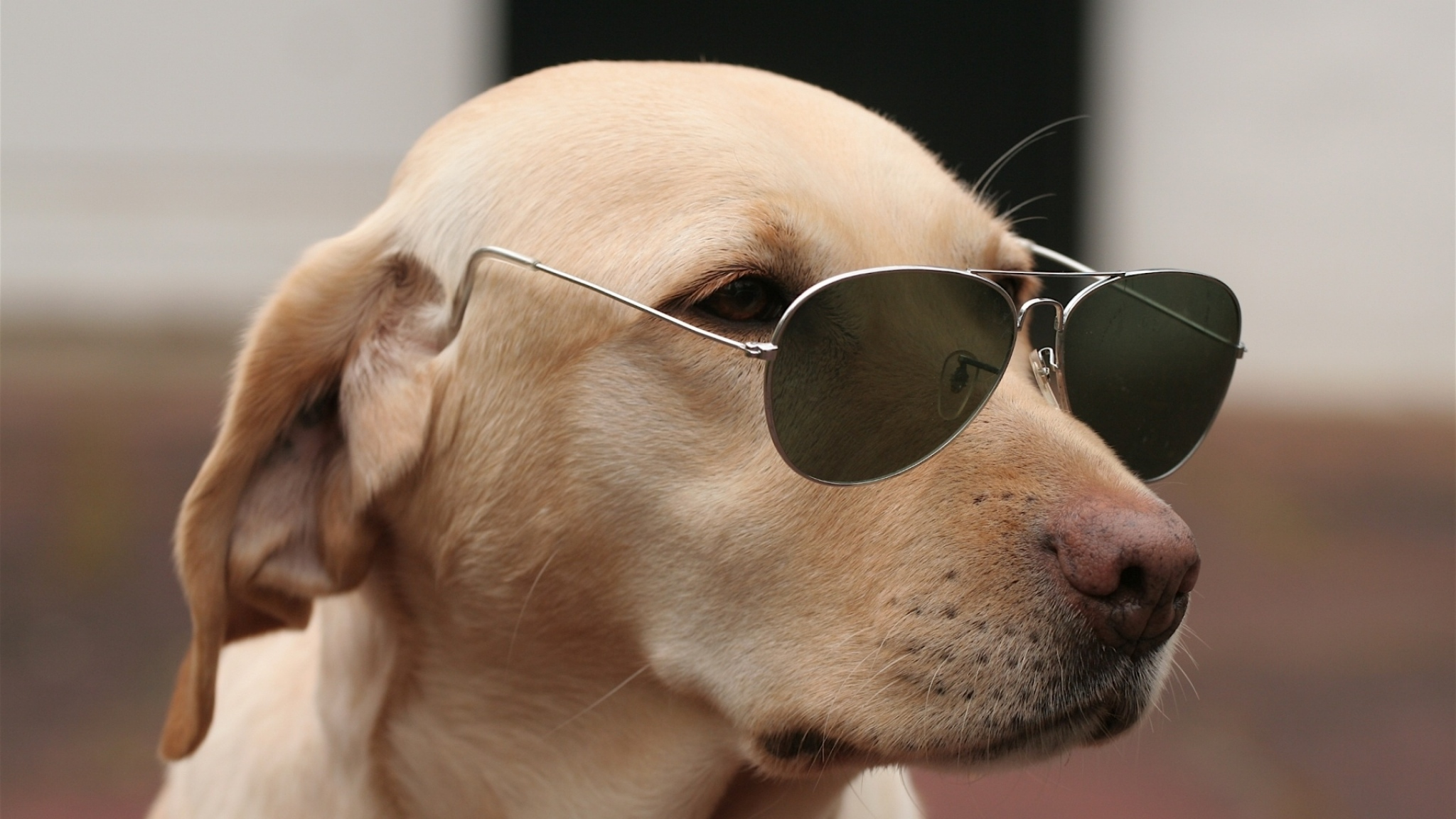 dog wearing glasses wallpaper pictures 60408