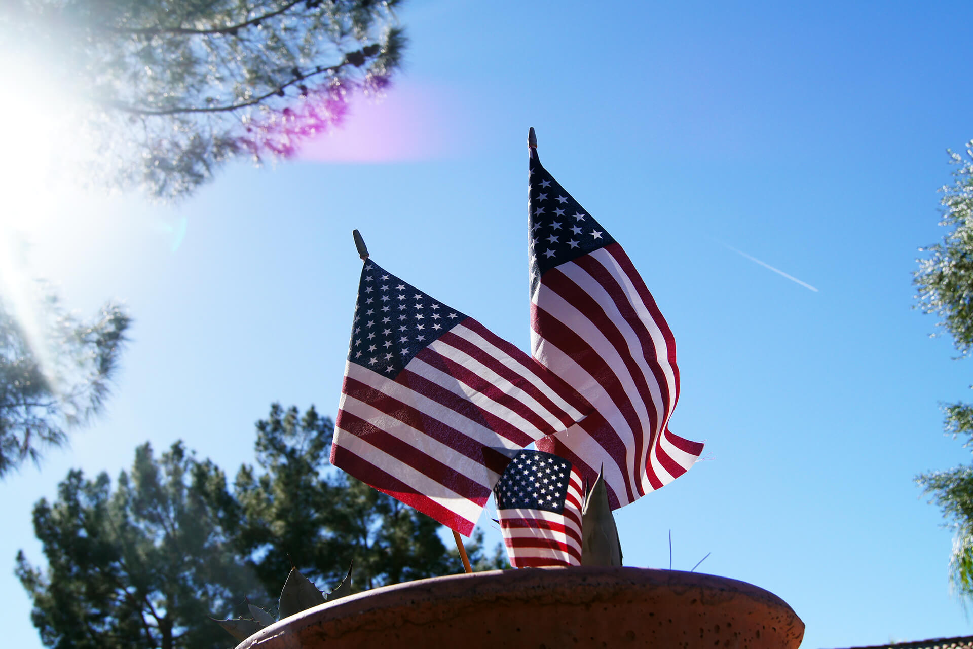 small american flags in flower pot wallpaper 61811