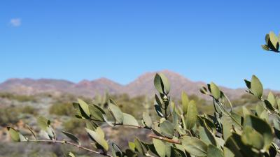 Arizona Leaves Up Close HD Wallpaper 61804