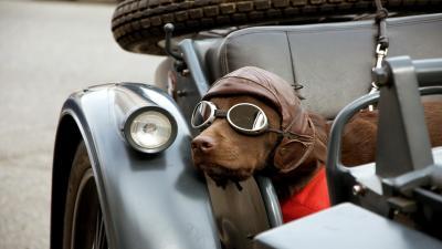 Dog Wearing Glasses Wallpaper Background 60403
