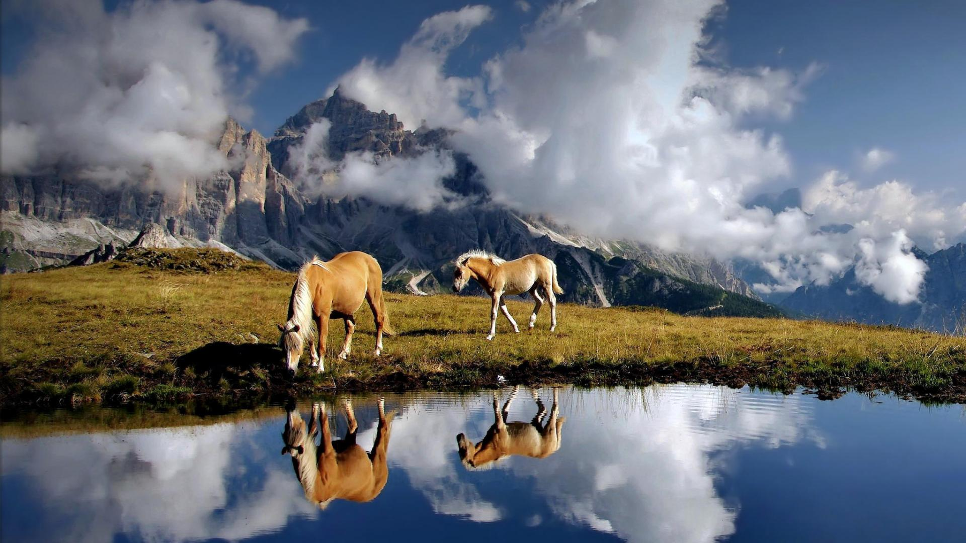 beautiful horse reflection hd wallpaper 59329