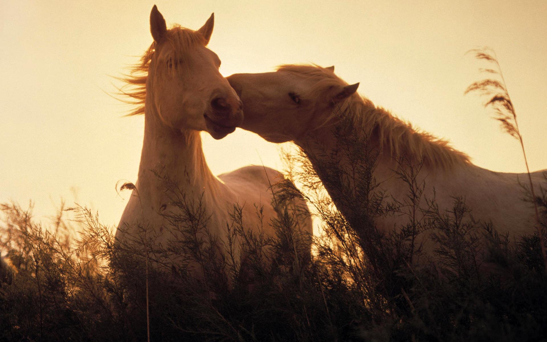 cute horse desktop wallpaper 59330
