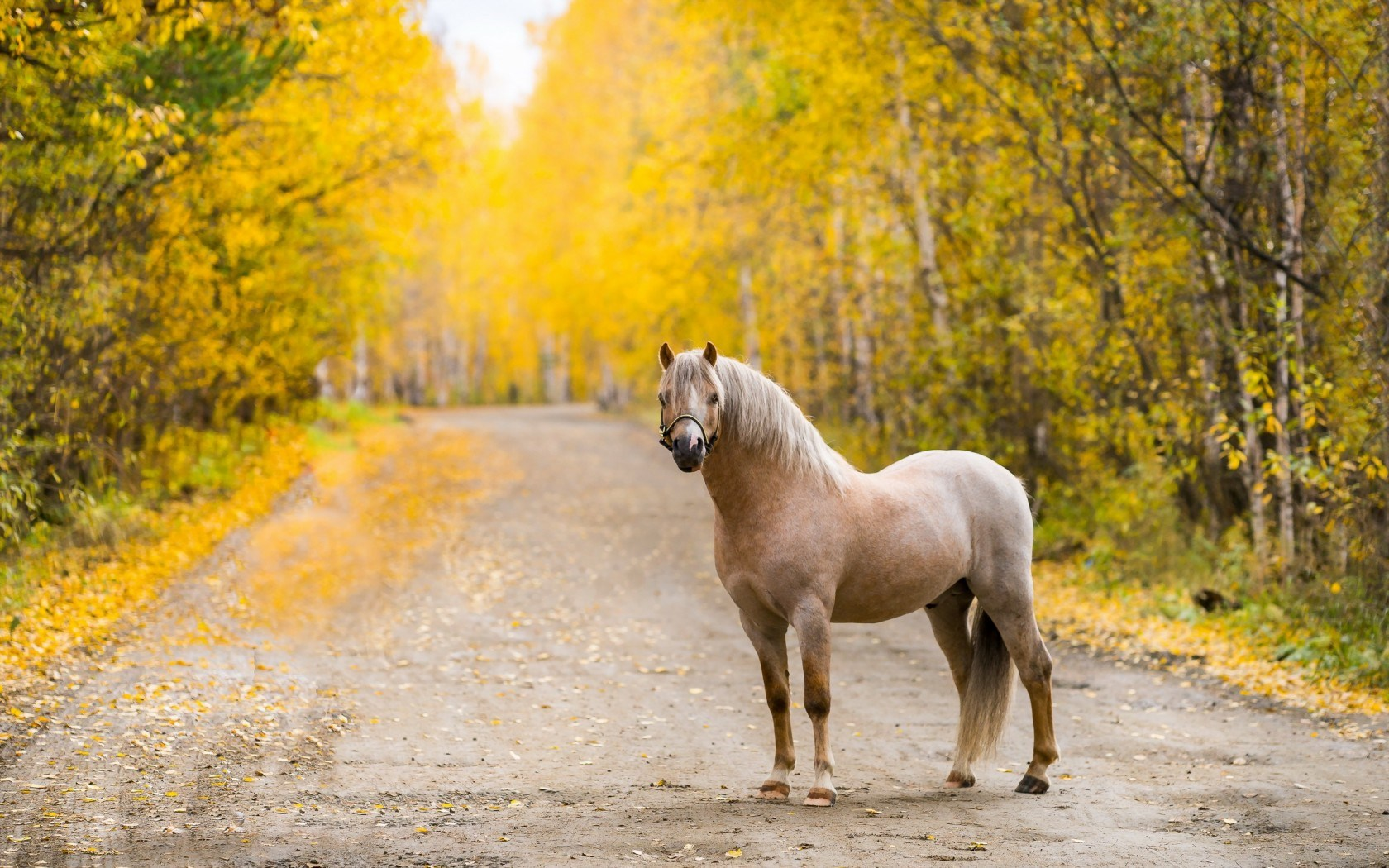 Horse Computer Wallpaper Photos 59332 1680x1050 px HDWallSourcecom