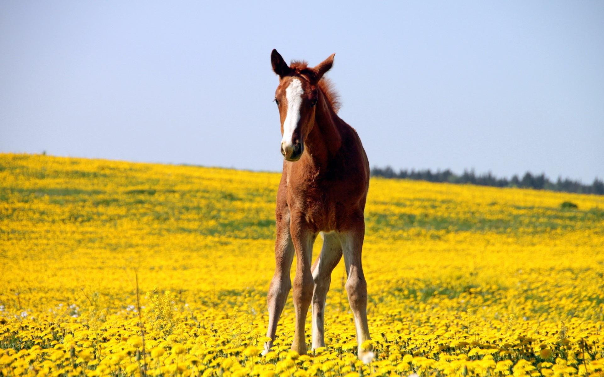 horse desktop wallpaper pictures 59327
