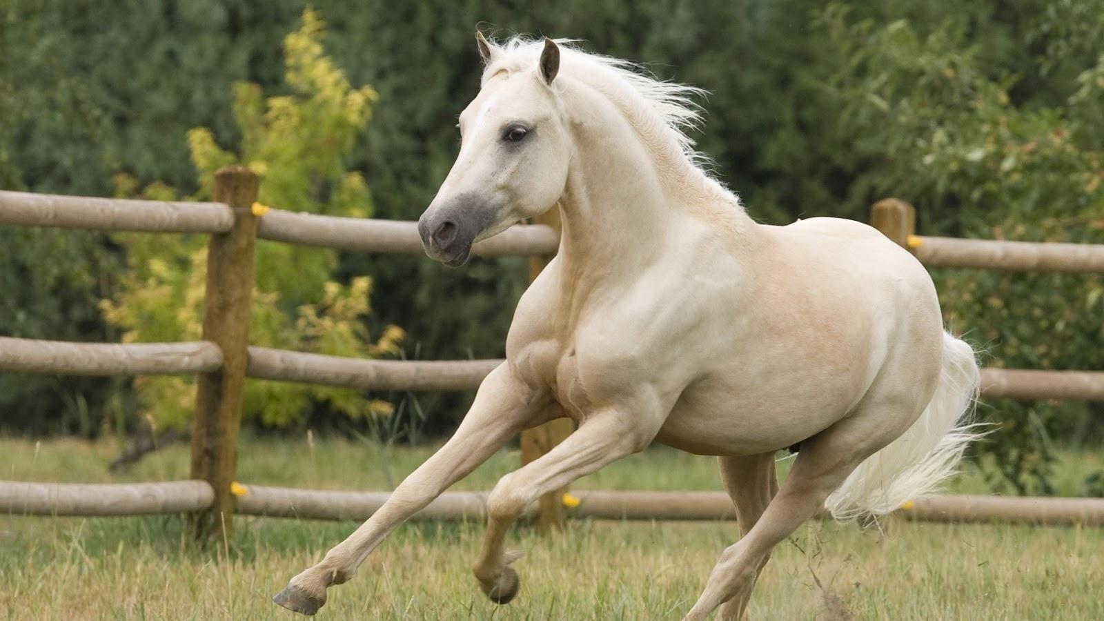 horse running computer wallpaper 59328