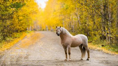 Horse Computer Wallpaper Photos 59332