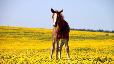 Horse Desktop Wallpaper Pictures 59327