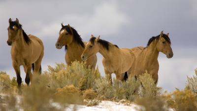 Horse Wallpaper Background HD 59326
