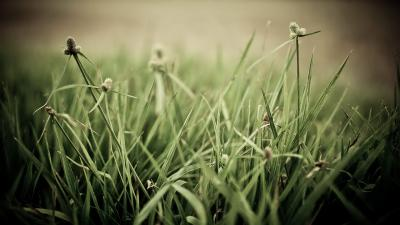 Grass Desktop HD Wallpaper 59680