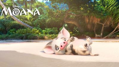 Moana Pua Widescreen Wallpaper 61674