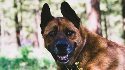 Happy Dog Smile HD Wallpaper 65078