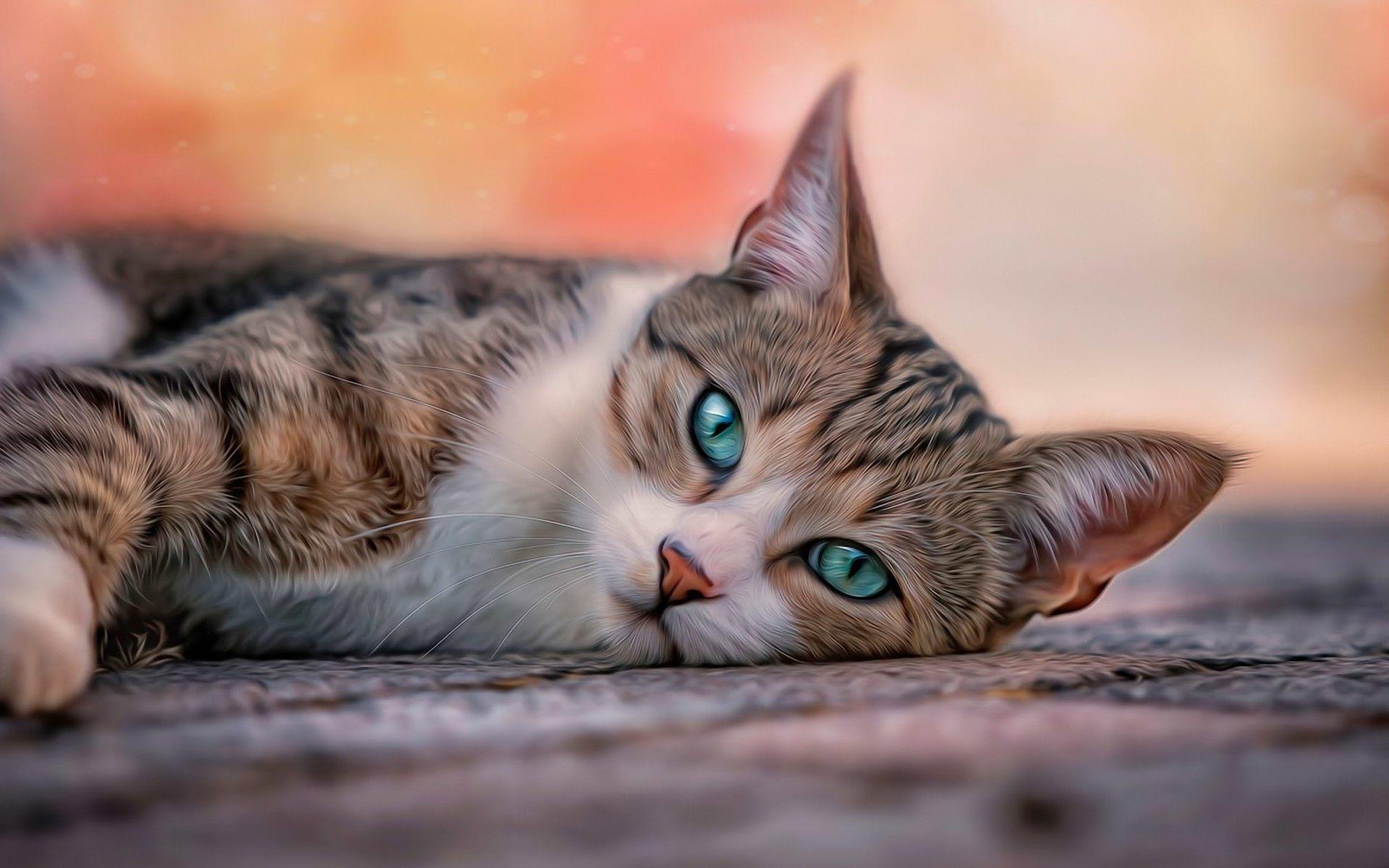 blue eyes cat wallpaper 62688