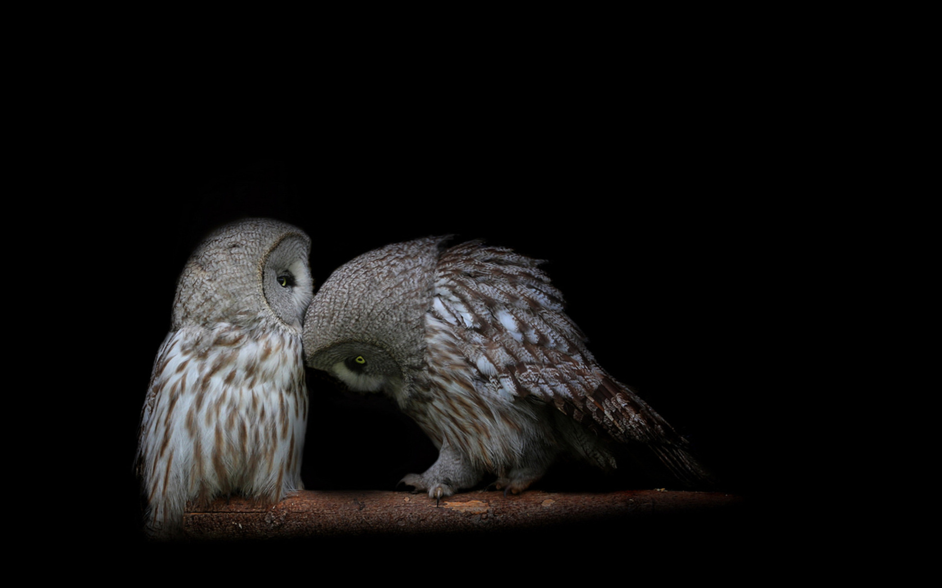 owls cuddling wallpaper 62953