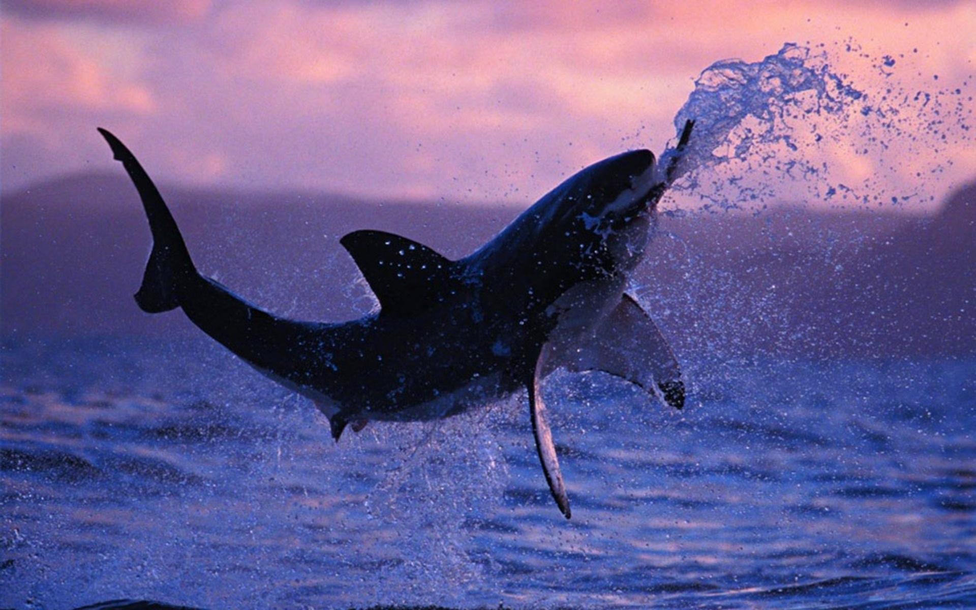 shark jumping wallpaper 62763
