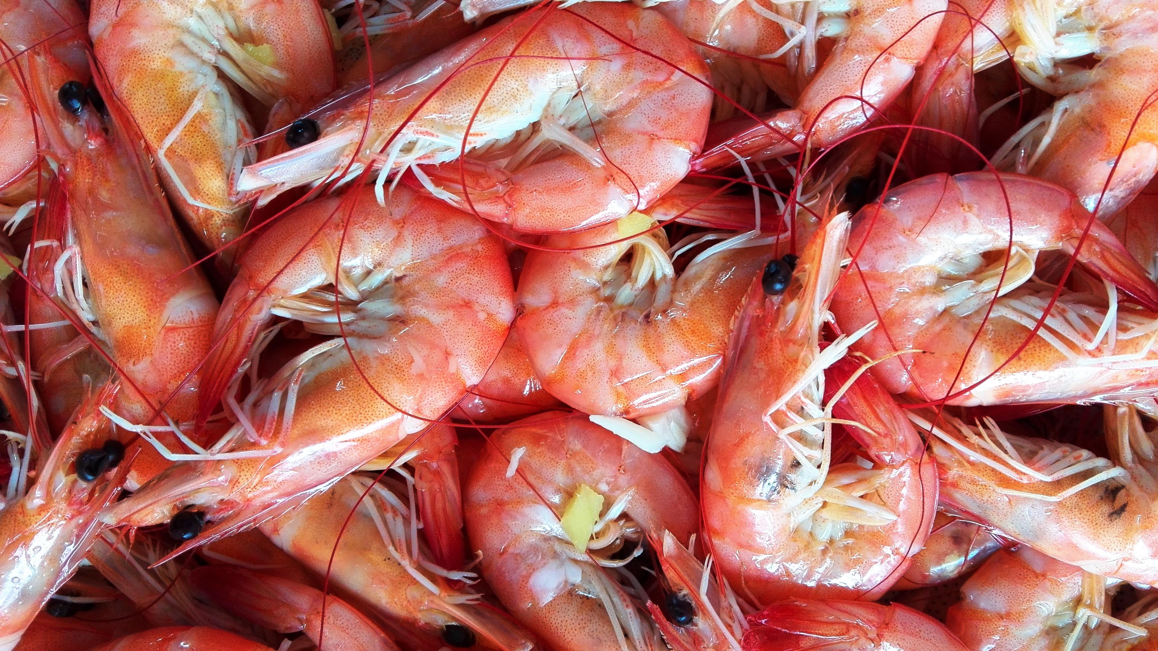 shrimp widescreen wallpaper 62536