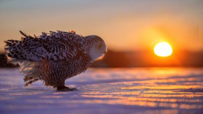 Owl Sunset Computer Wallpaper 62951