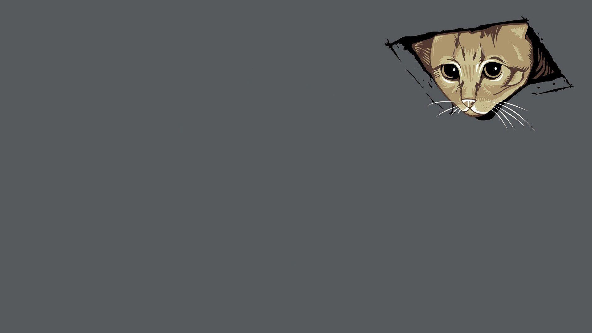 cat meme desktop wallpaper 64262