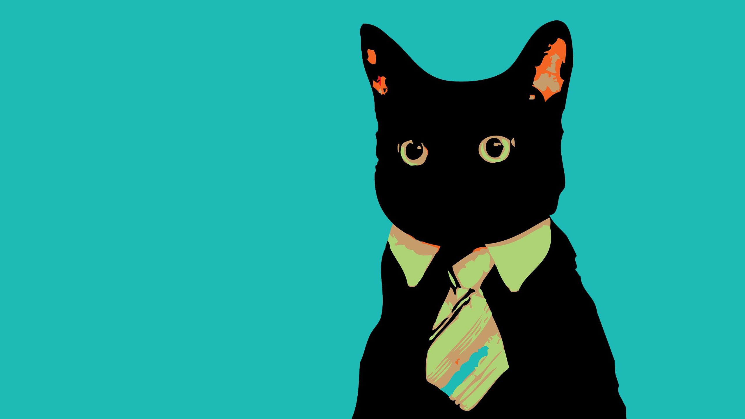 cat meme wallpaper background 64263