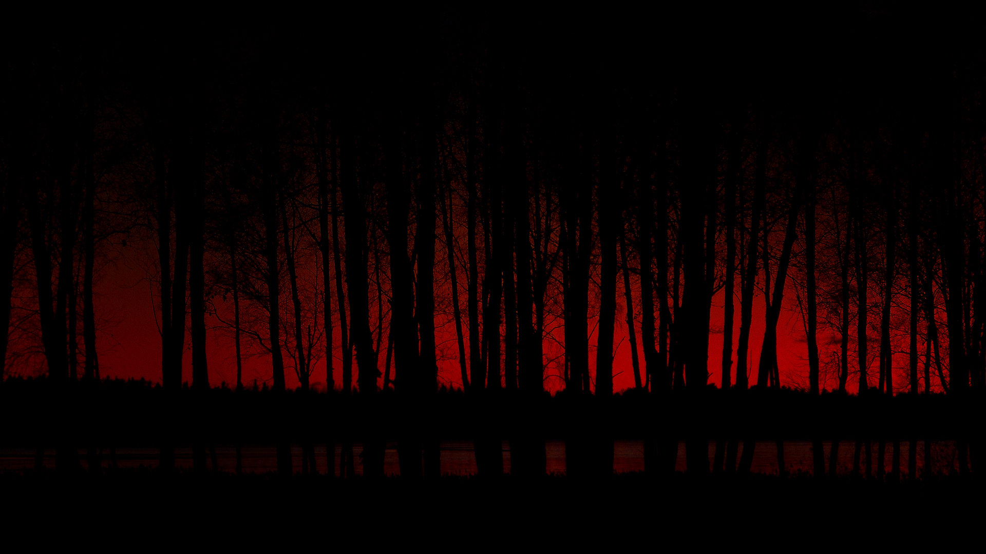 scary dark forest desktop wallpaper 64316 1920x1080px