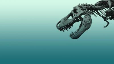 Dinosaur Fossil Wallpaper 62892