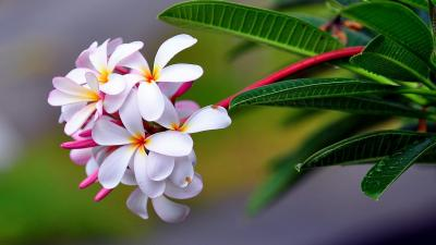 Exotic White Flowers Wallpaper HD 62809