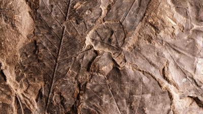Fossil Desktop Wallpaper HD 62891