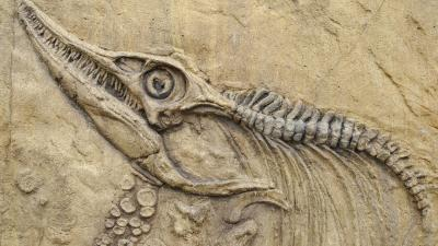 Fossil Wallpaper Background 62890