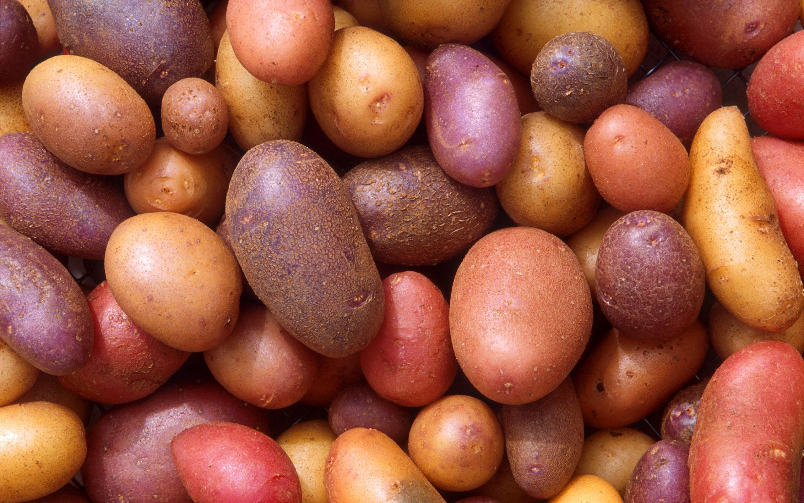 colorful potatoes food wallpaper background 63194