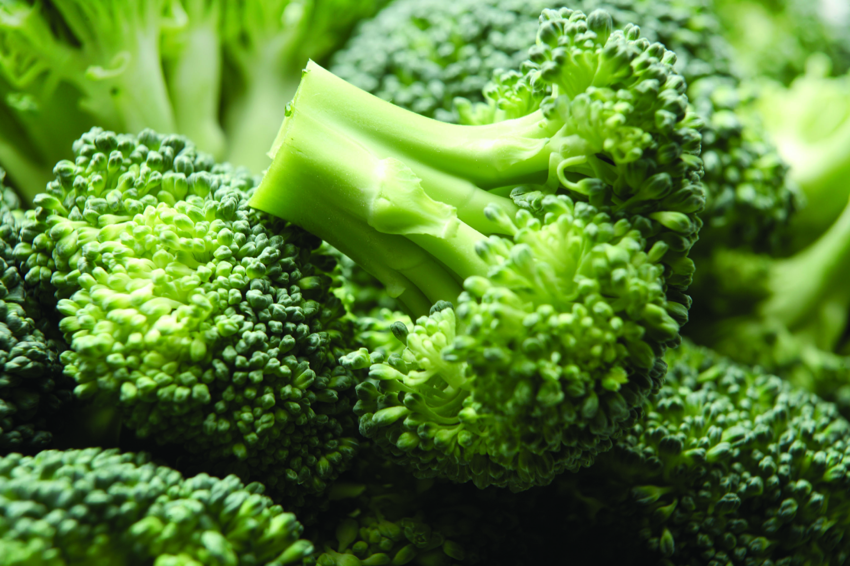 broccoli up close hd wallpaper 62709