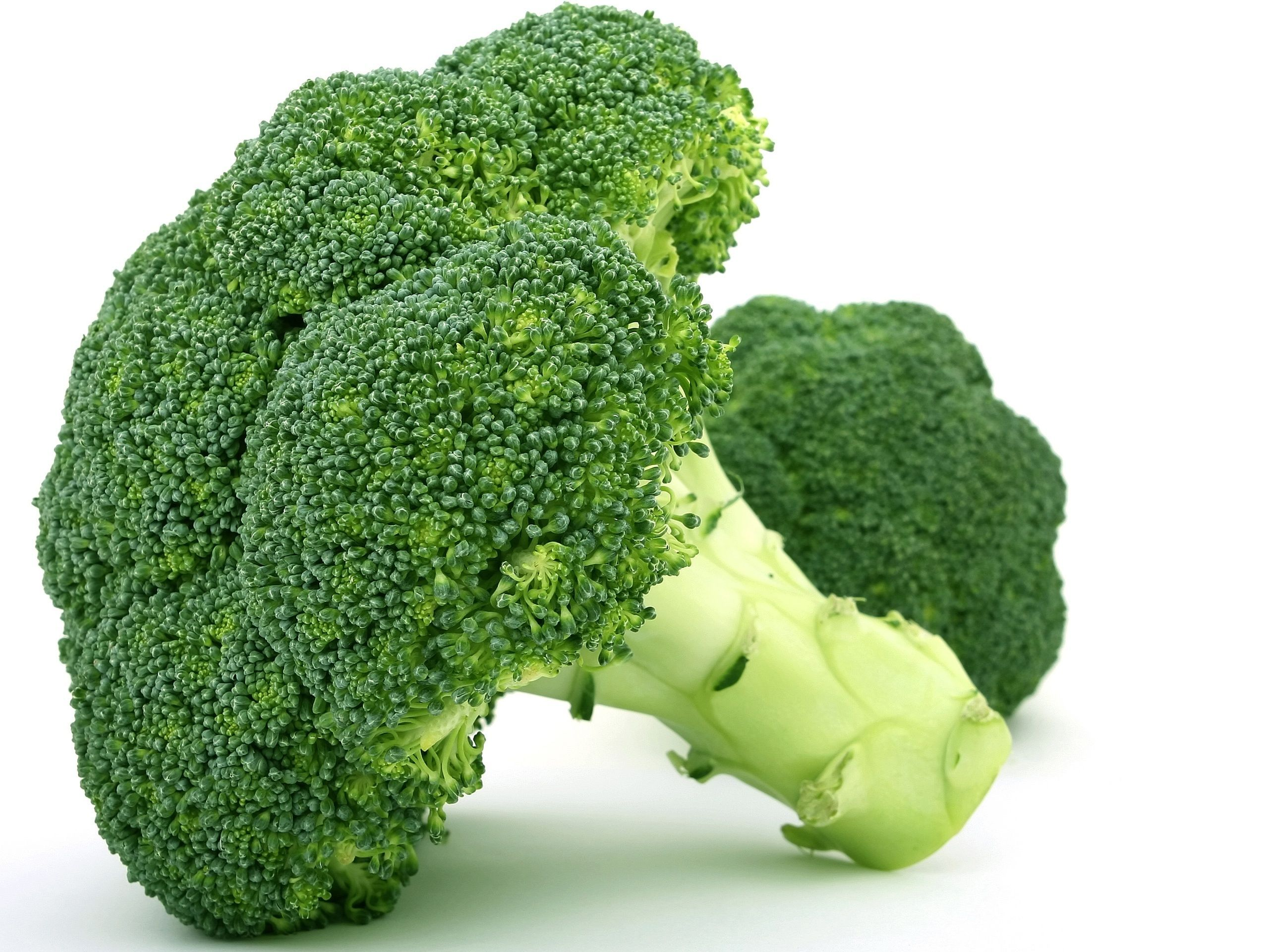 broccoli wallpaper background 62707