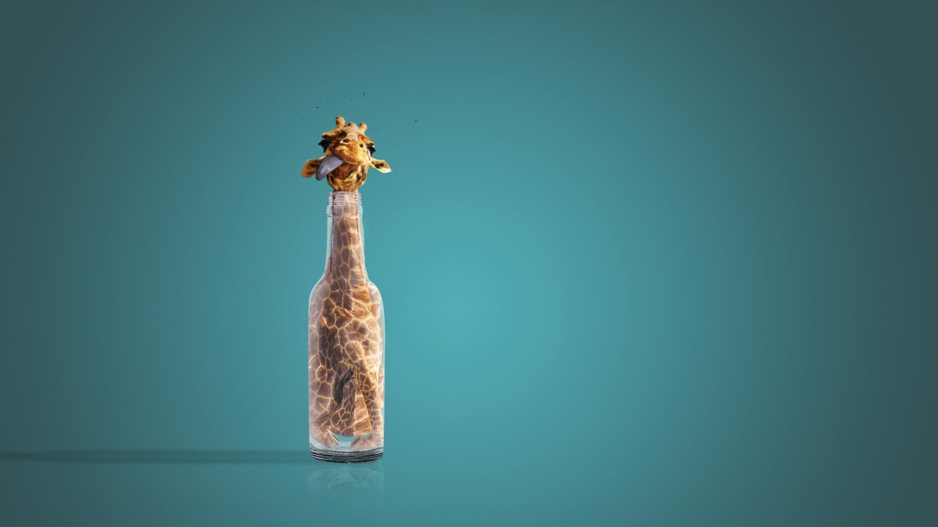 funny giraffe bottle wallpaper 68565