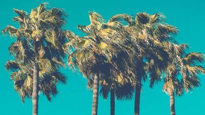 Palm Tree Wallpaper 68667