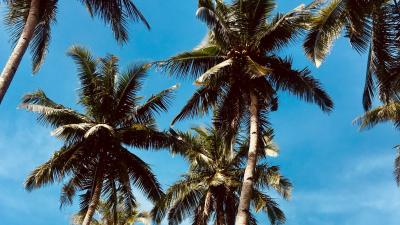 Palm Trees Desktop Wallpaper 68669