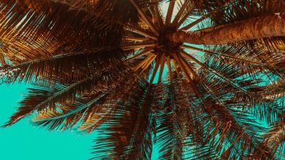 Tropical Palm Tree HD Wallpaper 68668