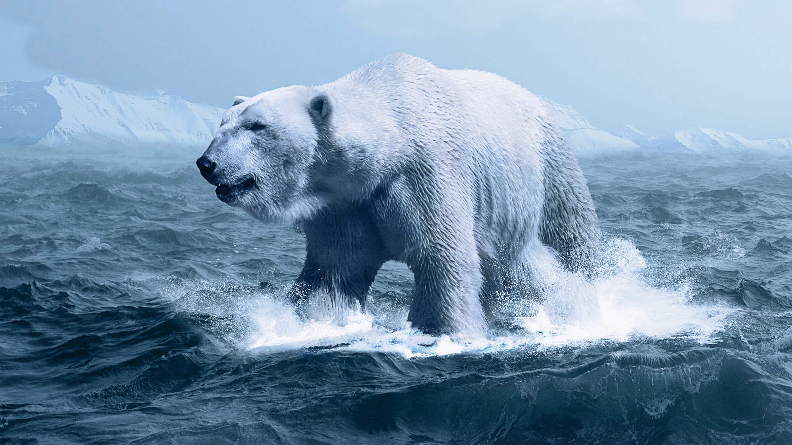 stunning polar bear background wallpaper 66739